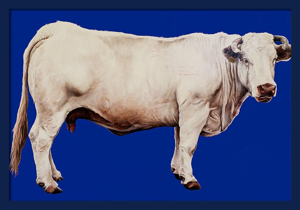 Sacha Schwarz - Oeuvres - Vaches - Icones : Vache 2